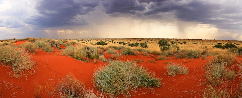 Life-giving rain falls across the Simpson Desert. These summer storms are not common, but are important for the survival of many species.