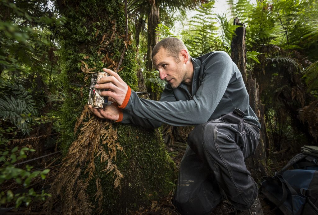 Researcher setting up one of 140 camera traps to better understand how feral cat numbers and behaviours change upon the eradication of foxes from the ecosytem.